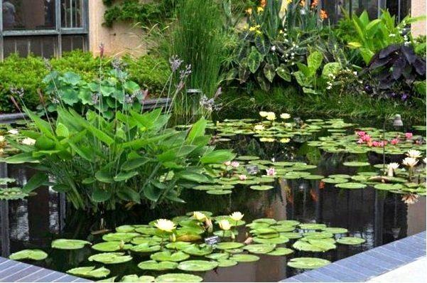 На фото представлен декоративный бассейн.