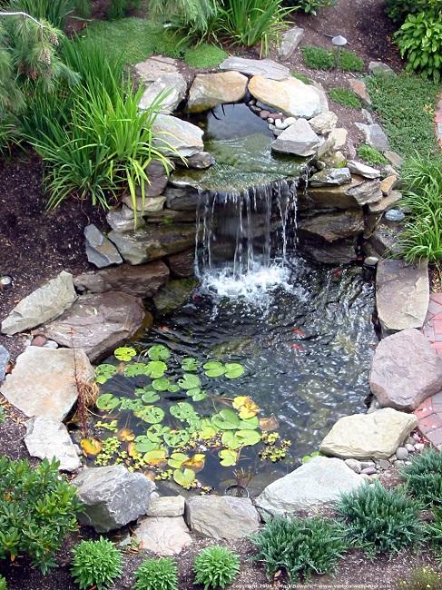 растительность вокруг водопада